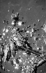 oilbird (15k image)